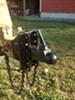 "Bulldog Cast Head Coupler w/ Wedge Latch - 2-5/16"" Ball - 5-Position Channel - 14,000 lbs customer photo"